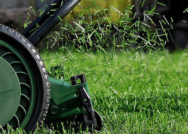 Que faire avec l'herbe coupée après la tonte