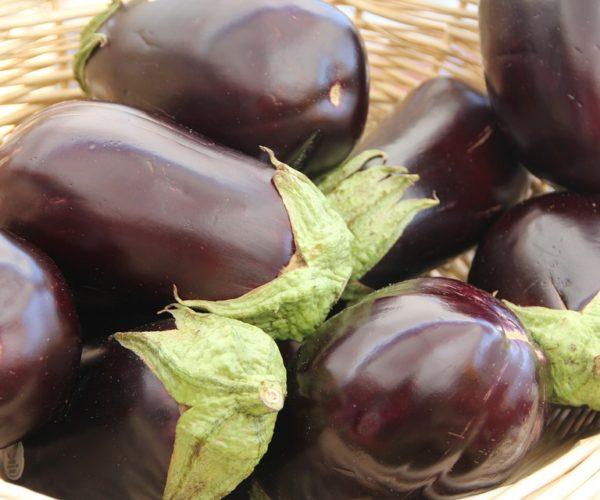 Plantation, culture et récolte de l'aubergine