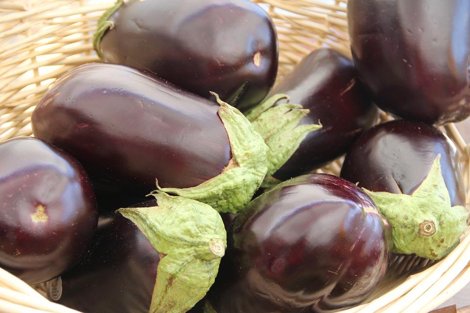 cultiver aubergine