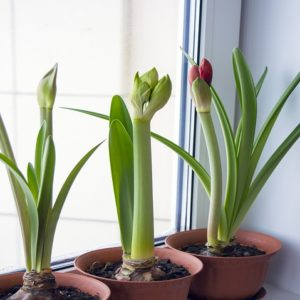 hivernage plante interieur