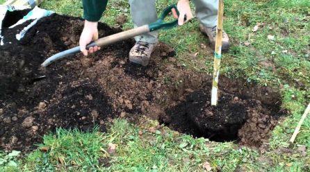 Planter un arbre fruitier : comment faire le trou de plantation ?