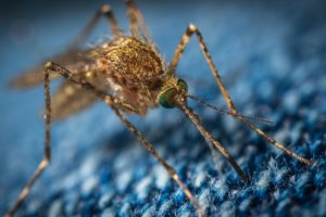 5 Plantes Anti Moustiques naturelles et efficaces