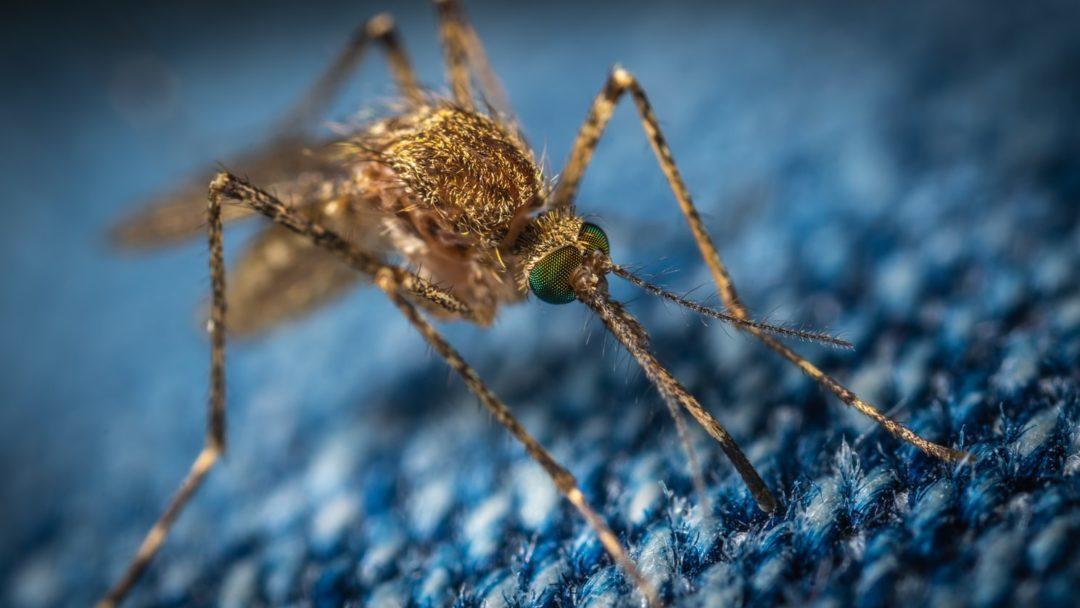 5 plantes anti moustiques naturelles