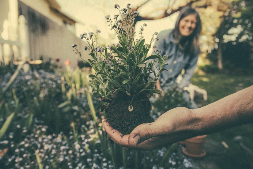comment amenager un petit jardin 1