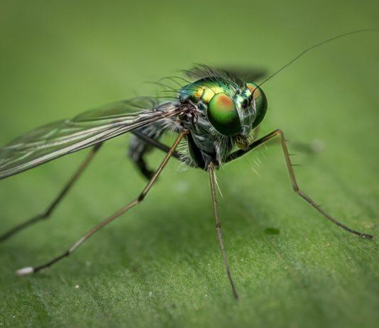 Comment éviter la prolifération des moustiques dans son jardin ?