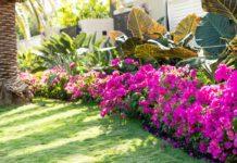omment-creer-de-beaux-massifs-floraux-nos-conseils