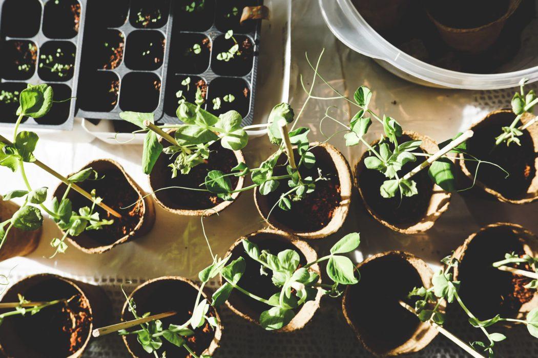 comment eviter proliferation moustique dans jardin
