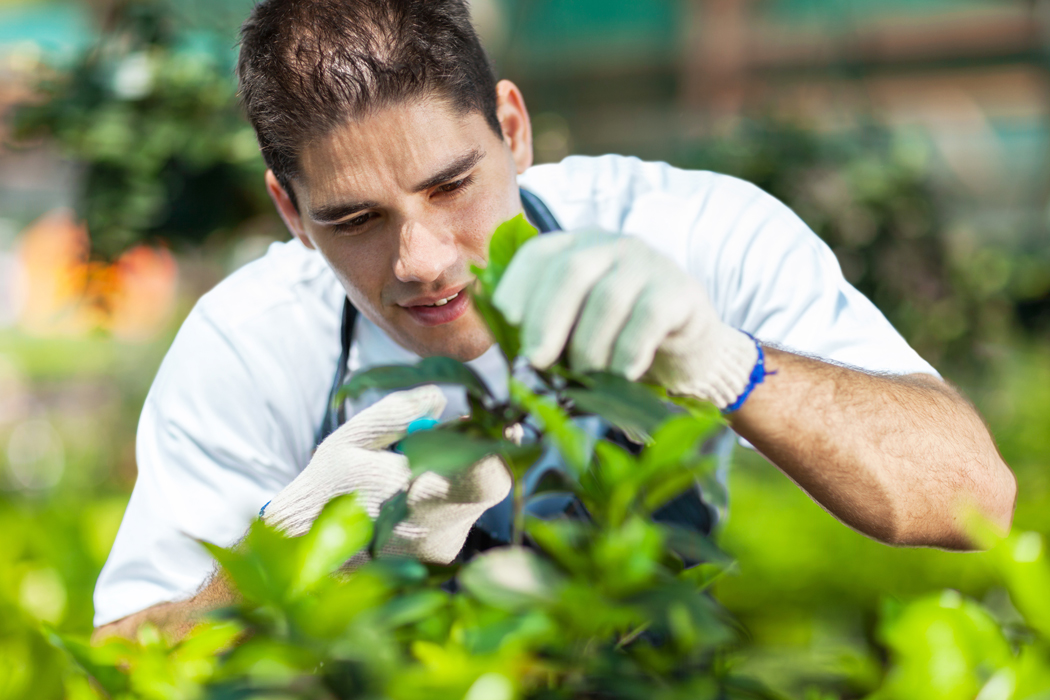 Canicule et jardinage : comment se protéger des fortes chaleurs ?