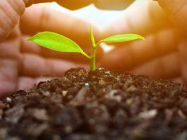faire des économies avec son jardin
