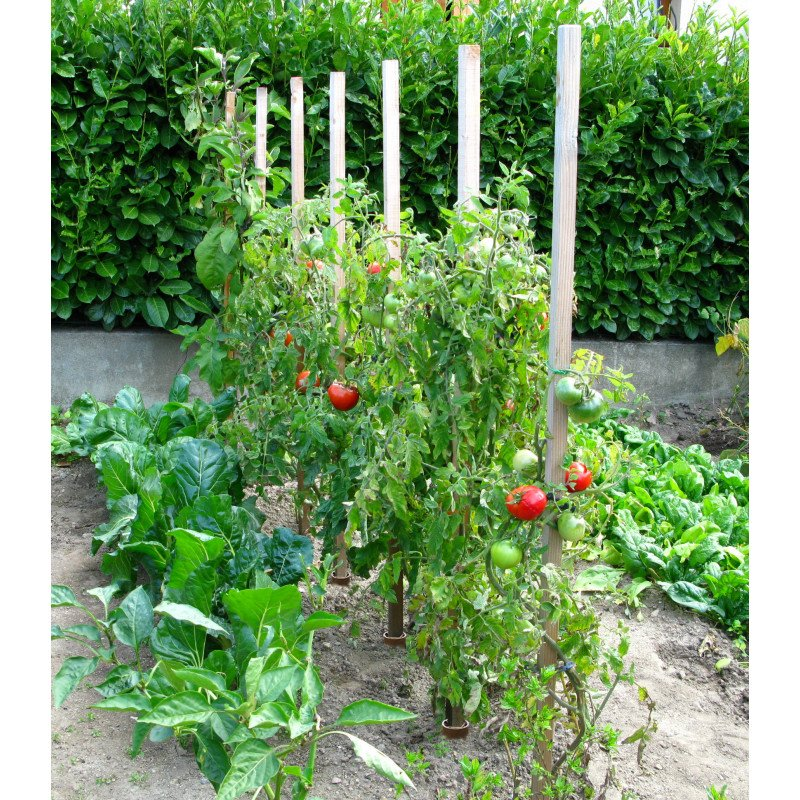 piquet droit tuteur tomates