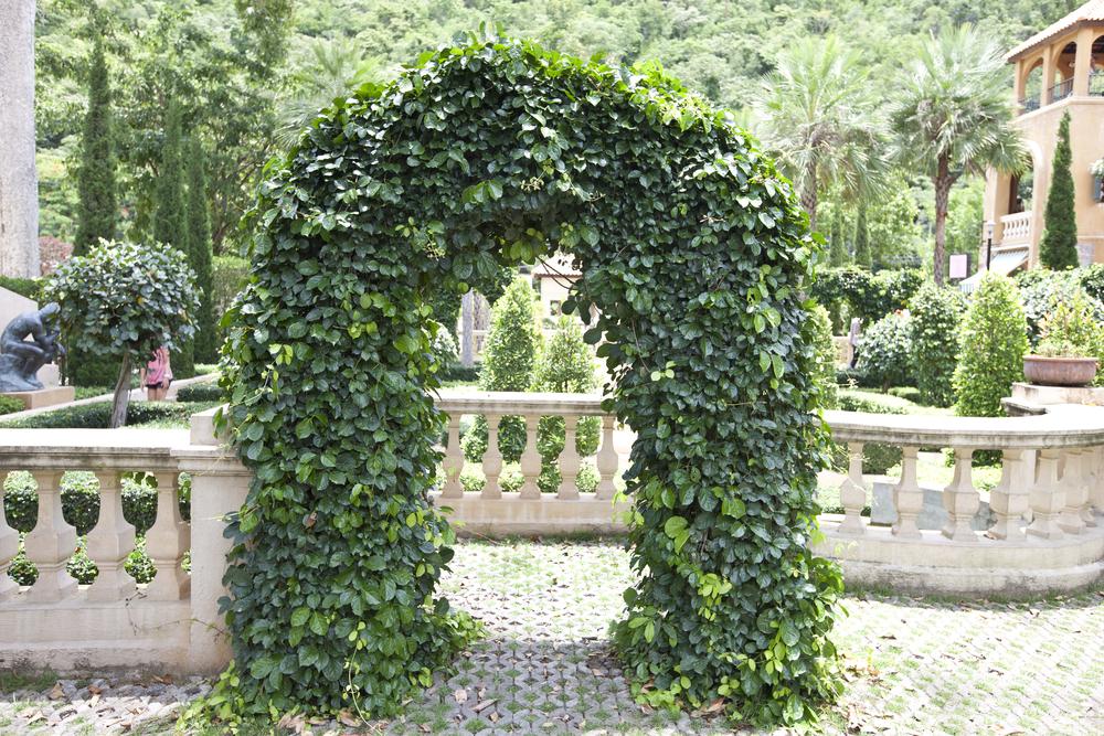 quelle arche de jardin
