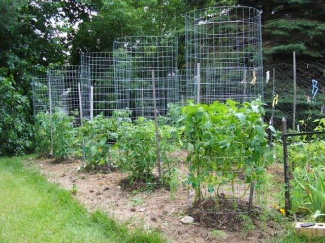 tuteurs tomates en cage