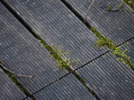 4 anti-mousse naturels pour terrasse