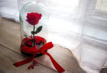 Comment stabiliser une rose naturelle