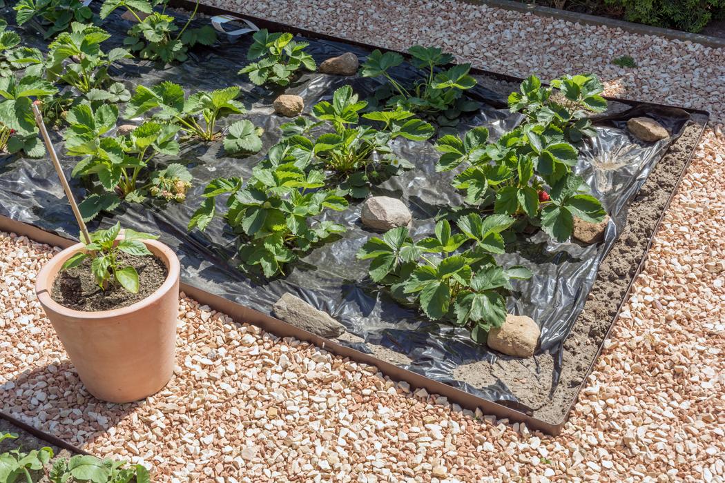 Comment choisir sa bâche de jardin?