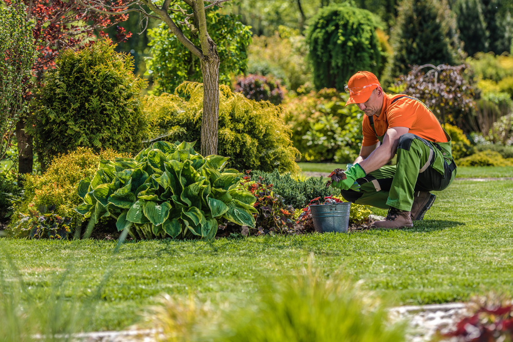 Jardinier ou paysagiste ? Que choisir ? Qui fait quoi ?