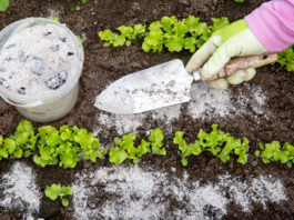 Comment utiliser de la cendre de bois au jardin