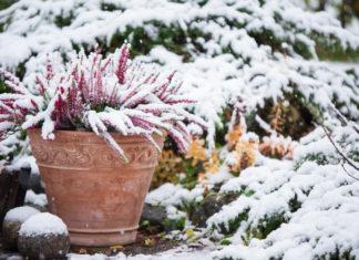 Comment arroser ses plantes en hiver